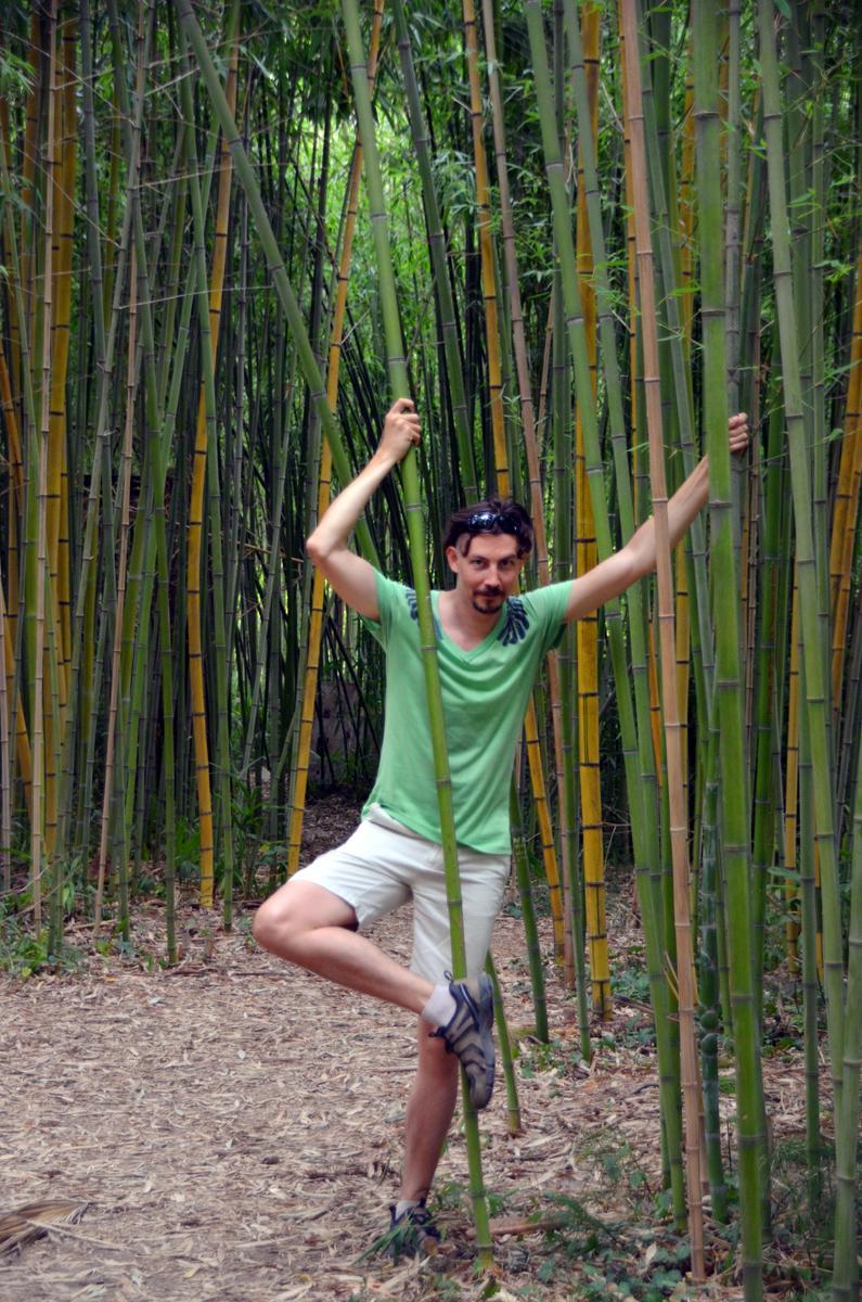 5. В зарослях бамбука.