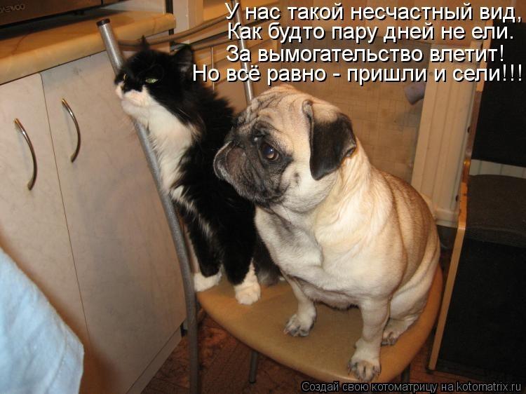 Смешные картинки с надписями кошки и собаки, открытки россия поздравления