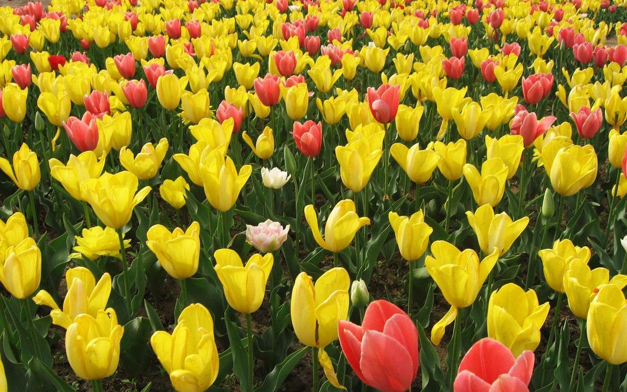 картинка живого цветочка покупают
