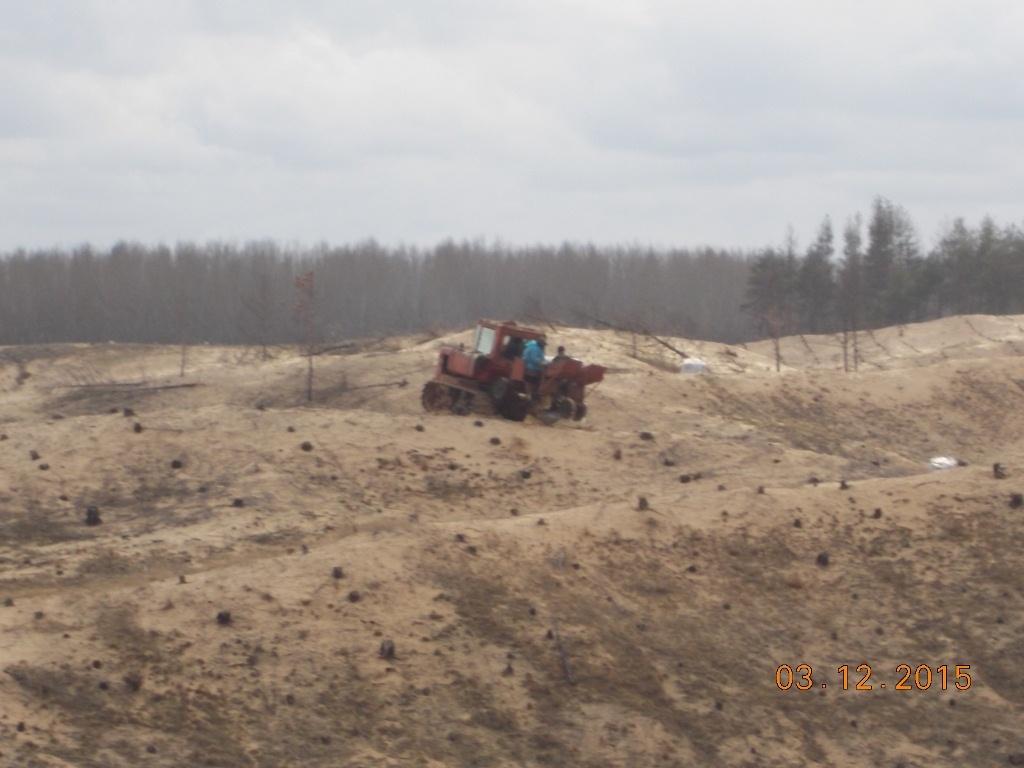 Высадка леса
